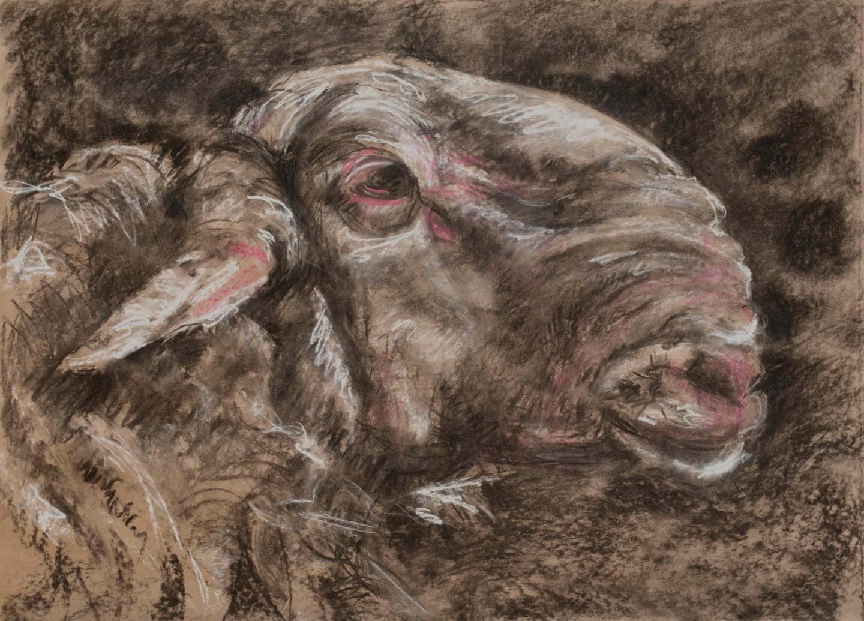 Barbara Guias-Vaquier - Mon beau mouton
