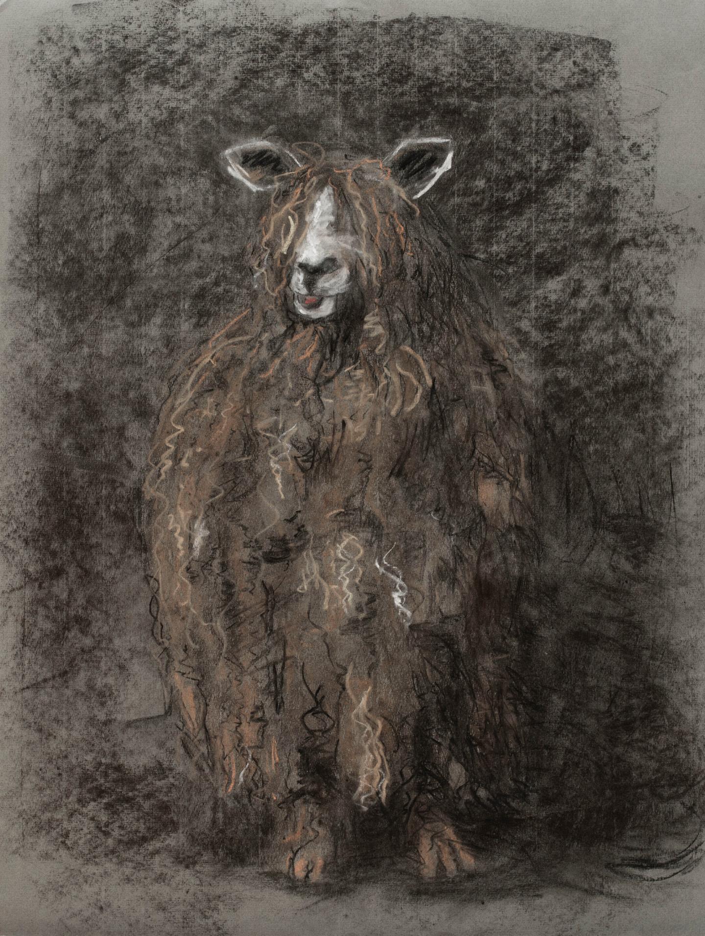 Barbara Guias-Vaquier - Mouton aux longs poils