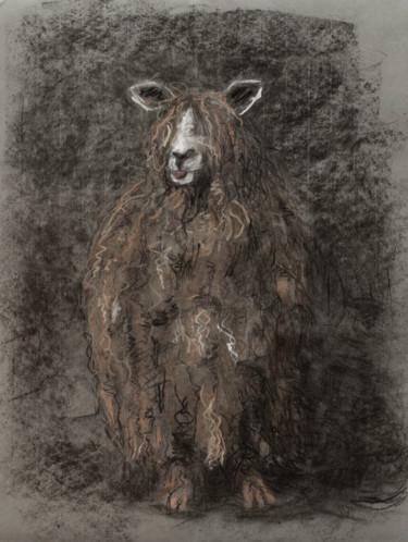Mouton aux longs poils